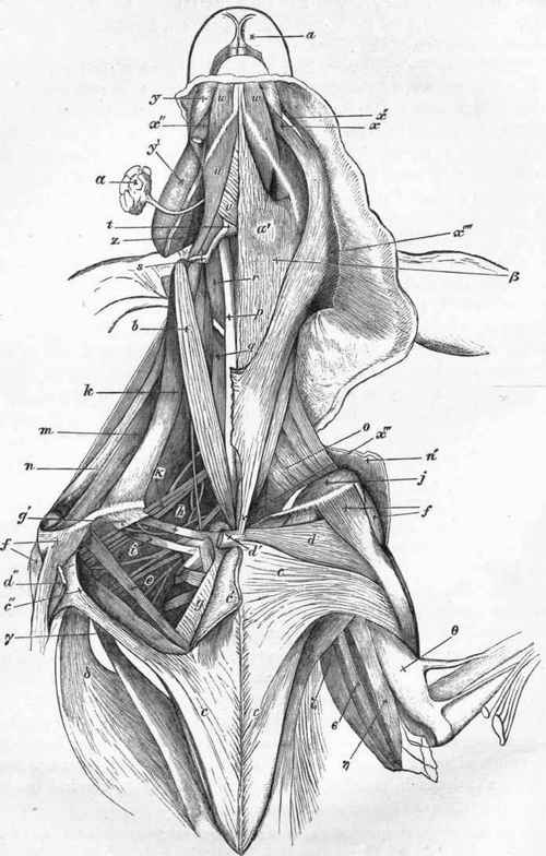 alfa img showing gt avian anatomy diagram