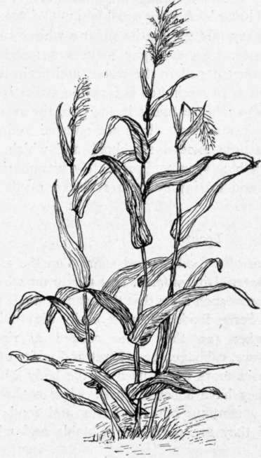 FOOD COLORING IN PLANT WATER « Free Coloring Pages