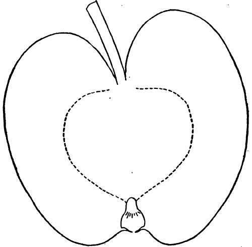 Description Of Apple Varieties: C. Part 2