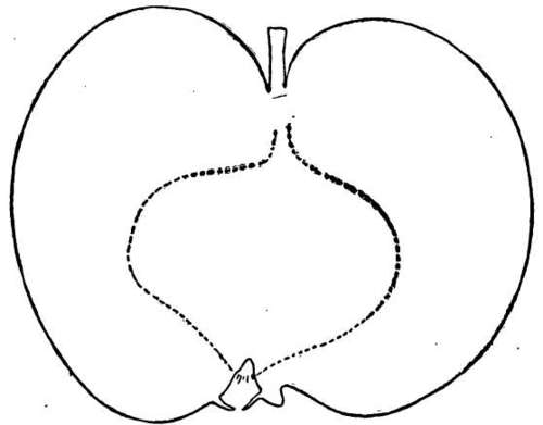 Description Of Apple Varieties: P. Part 3