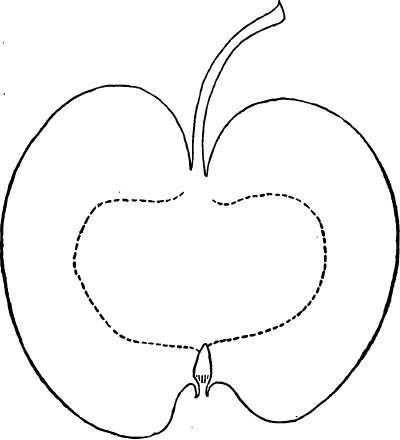 Description Of Apple Varieties: W. Part 3