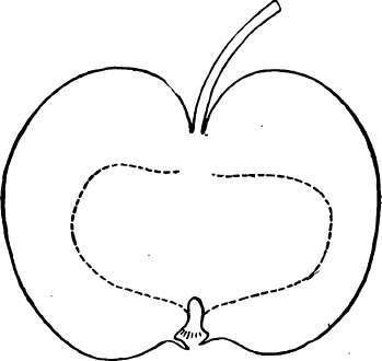 Crab-Apples. Part 3