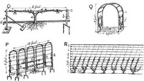 https://i0.wp.com/chestofbooks.com/gardening-horticulture/fruit/Pictorial-Practical-Fruit-Growing/images/horizontal-upright-cordons-espaliers.jpg