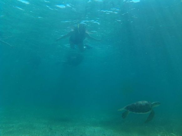 costa-maya-coral-reef-snorkeling (2)
