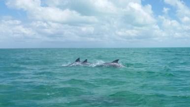 avistamiento de delfines en la bahia de chetumal