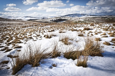 Ingram_Cheviot_Hills_Northumberland_(1_of_1)-3