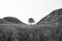 Hadrian_Tree_chevaugeon_(1_of_6)