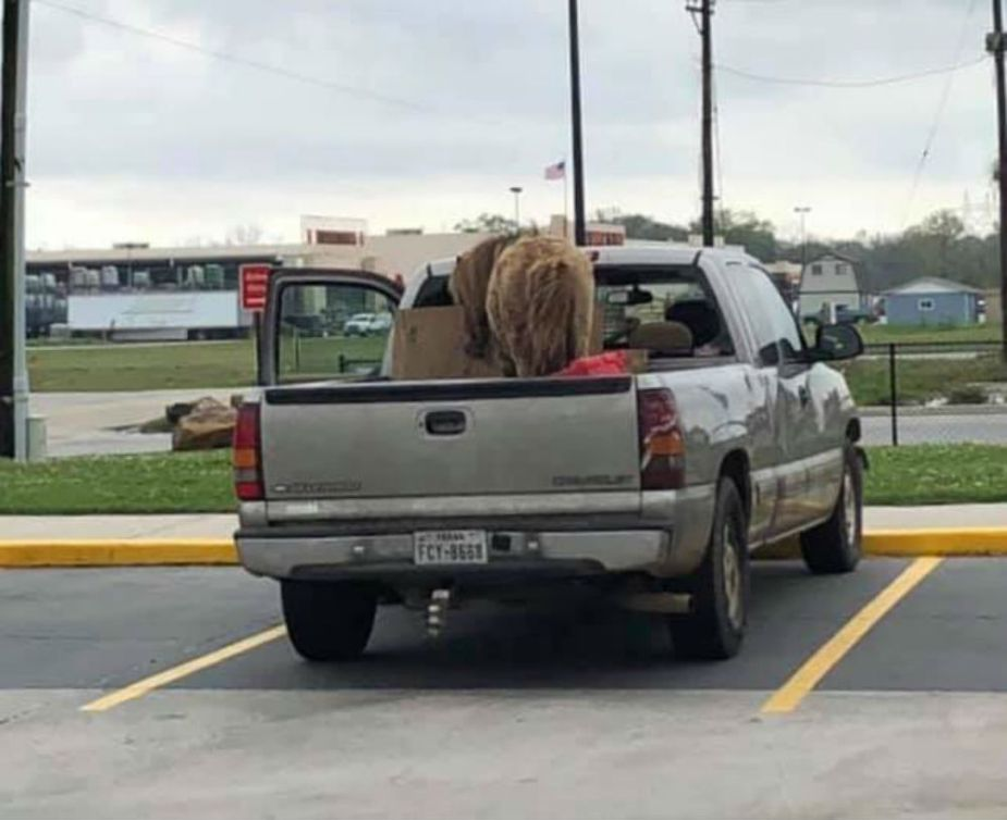 Chevrolet Silverado with Horse