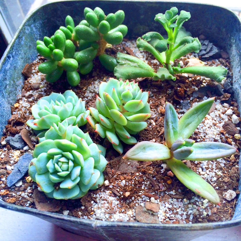 Plants5