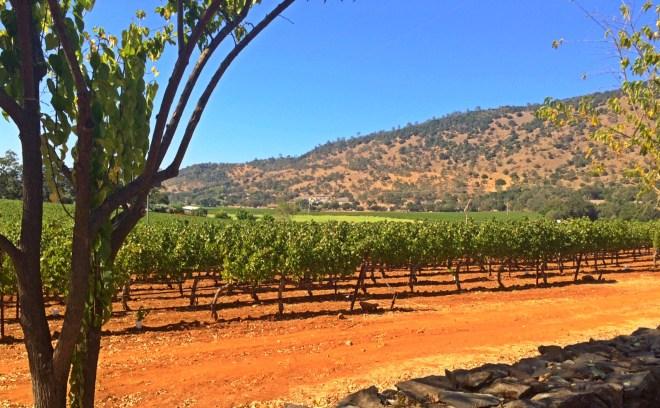 Wineries roadside