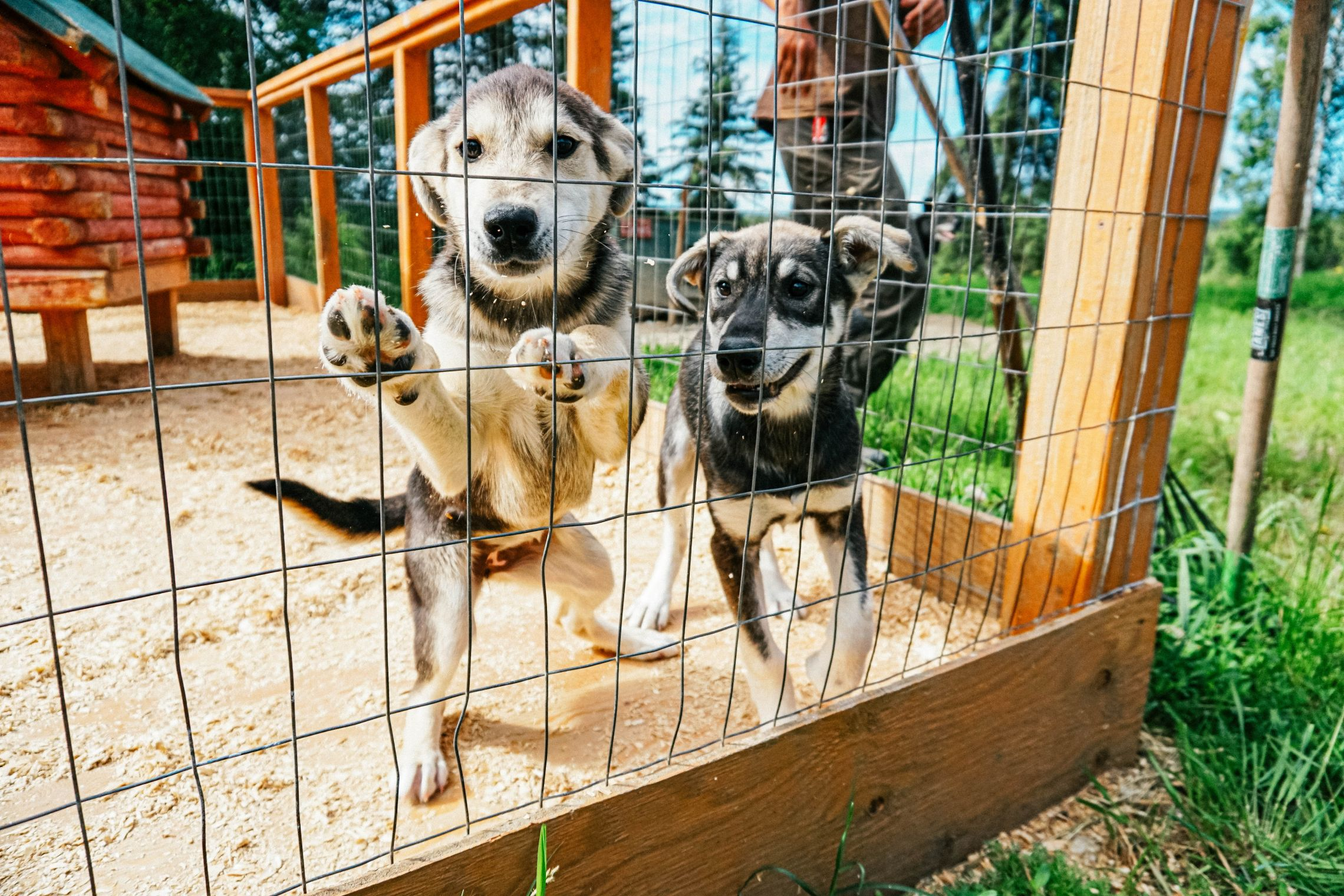 Visit Paws For Adventure and feel the energy and excitement of over 60 lovable kennel dogs!