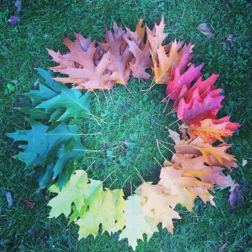 Autumn leaves by Lilly Walkers