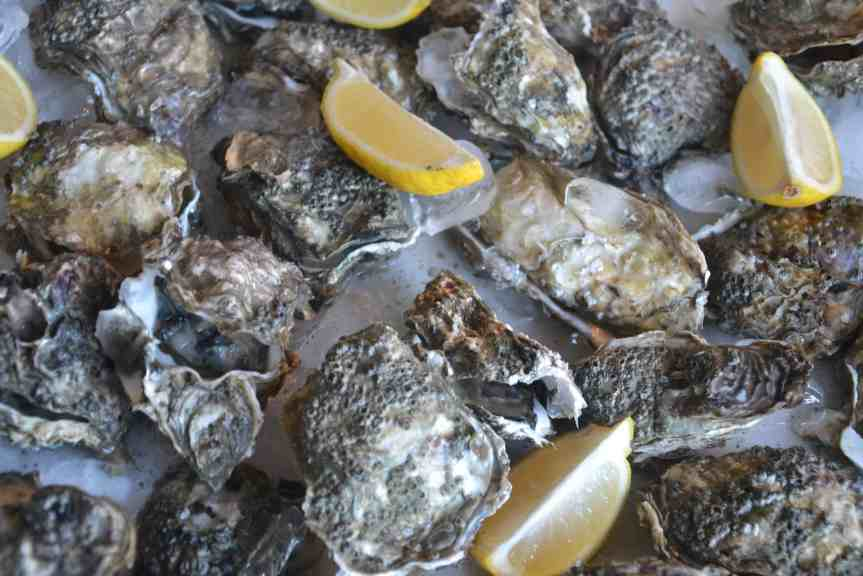oysters (8)