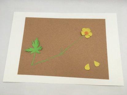 herbier en papier bouton d'or