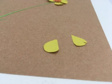 herbier en papier pétales bouton d'or