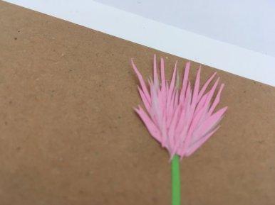 herbier en papier fleur de trèfle