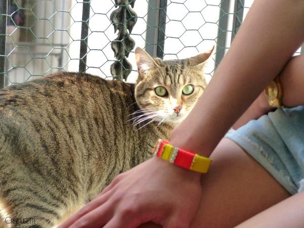 chez lisette diy manchette colorée chaton
