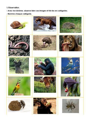 Les Régimes Alimentaires Des Animaux : régimes, alimentaires, animaux, Régimes, Alimentaires,, Chaînes, Prédation., Madame, Têtard
