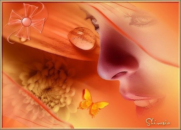 Orange  ... belle image