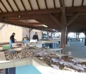 Ventes de poissons sur le quai de grandcamp
