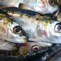 sardines fraiches