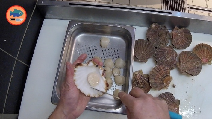 noix de saint-jacques blanche