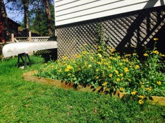 lovely cottage gardens with a canoe to explore the creek