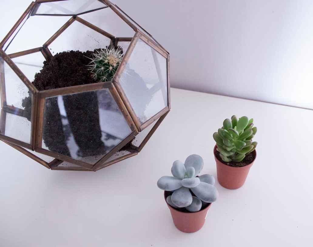 les petits cactus pour le terrarium - Do it yourself : composer son propre terrarium