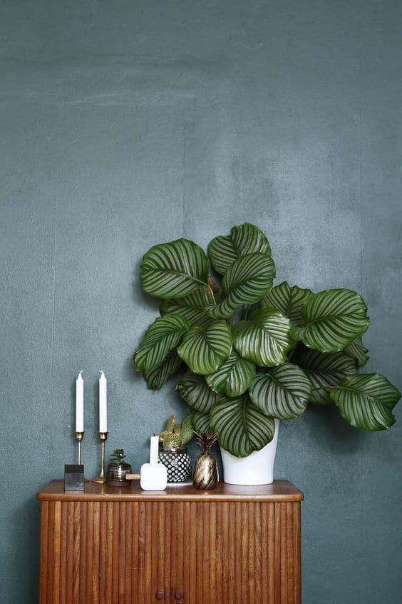 une grande plante pour decorer - Les fleurs s'invitent dans la décoration autour d'une inspiration