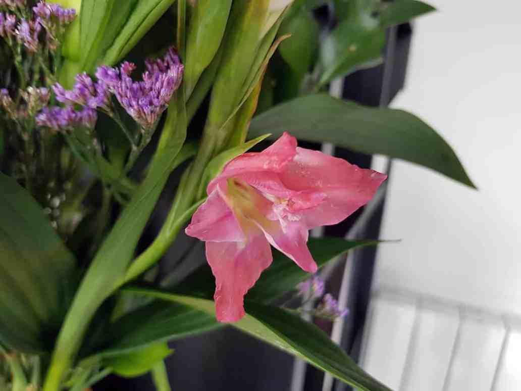 glaieul rose - Bloom's, une box de fleurs remplie de charme
