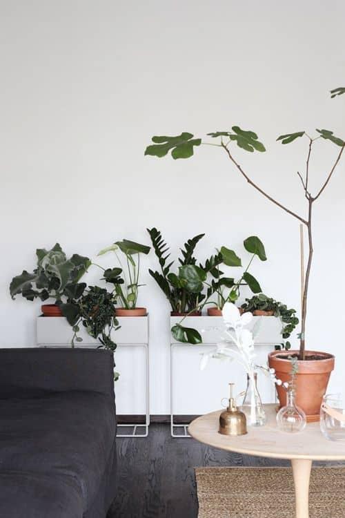 plante - Comment réussir une décoration feng shui, très zen ?