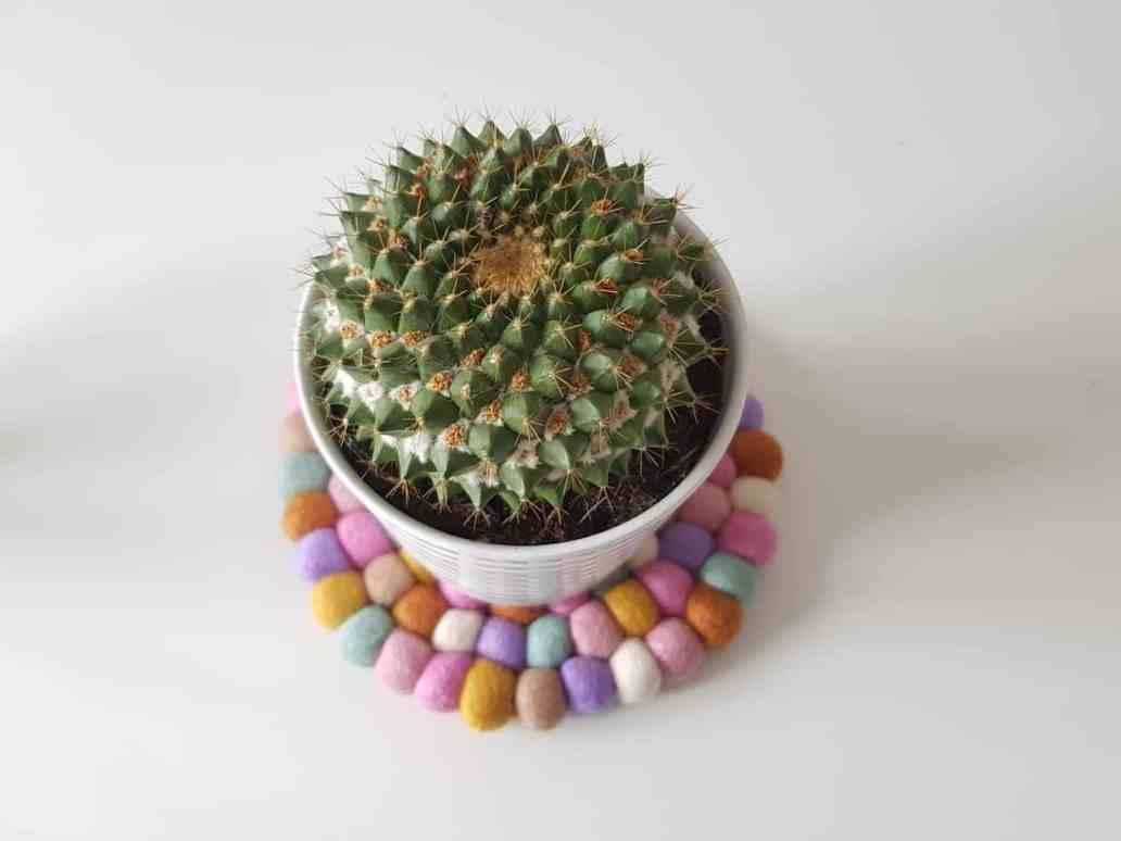 cactus sur dessous de plat sukhi 2048x1536 - Mes indispensables décos : 9 objets décoratifs dont je ne peux pas me passer