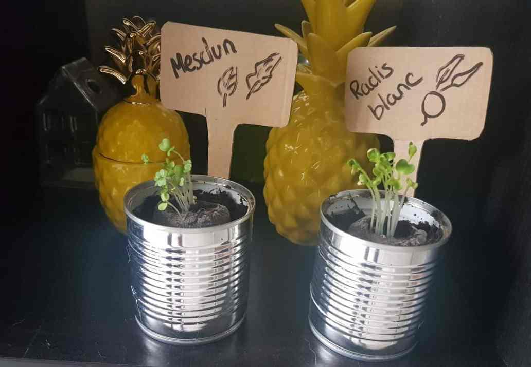 semis mon petit coin vert apres deux semaines 2048x1418 - Mon Petit Coin Vert, une box de jardinage