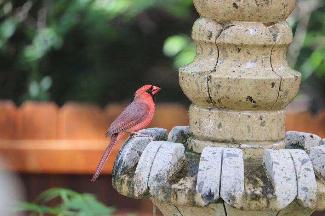 cardinal 5233209 1280 2 - Un jardin moderne et design !