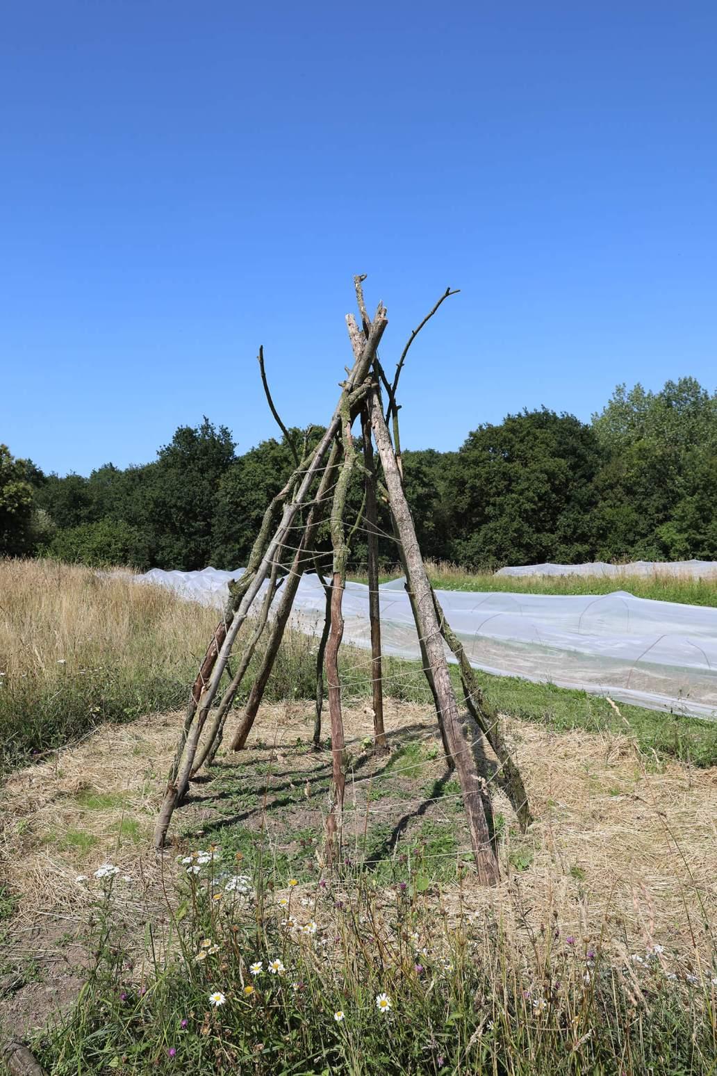 Un tuteur dressee dans les potagers de Potage et Nature  1365x2048 - Potage et Nature : une ode à la permaculture au coeur de la Bretagne