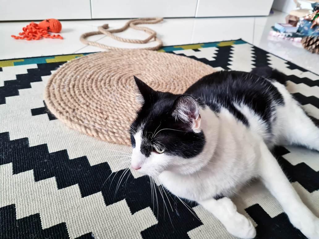 20210105 153806 1 - DIY bohème : fabriquer un tapis mandala avec des cordes