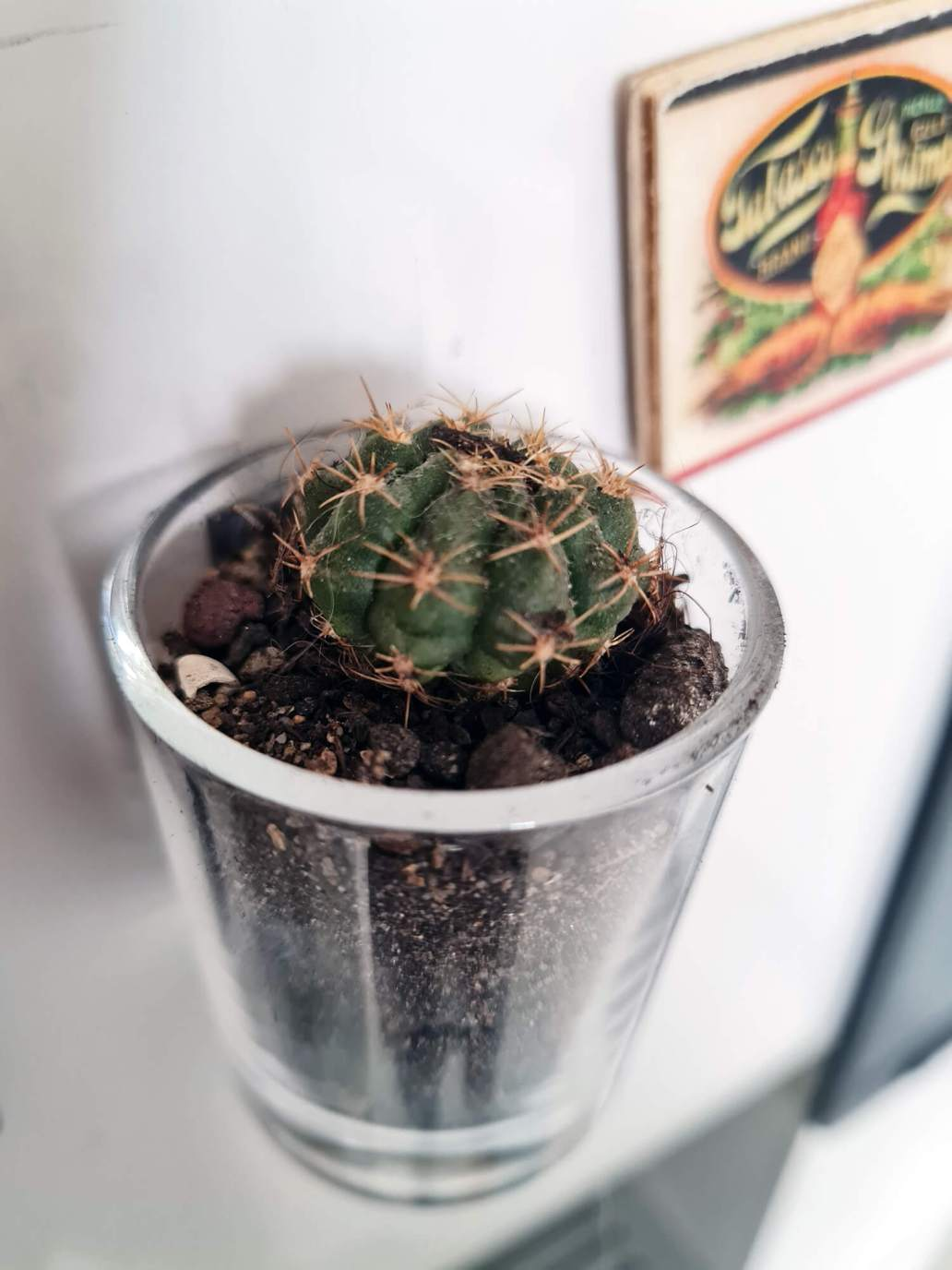 20210203 121900 - DIY cuisine : fabriquer des magnets cactus pour le frigo
