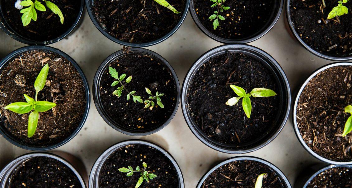 Adopter une nouvelle manière de cultiver avec la permaculture