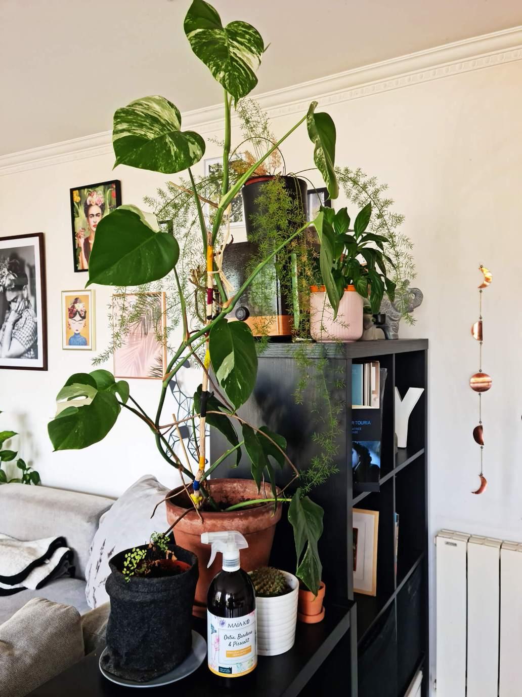 20210512 123926 - Prendre soin des plantes : comment j'entretiens ma jungle urbaine
