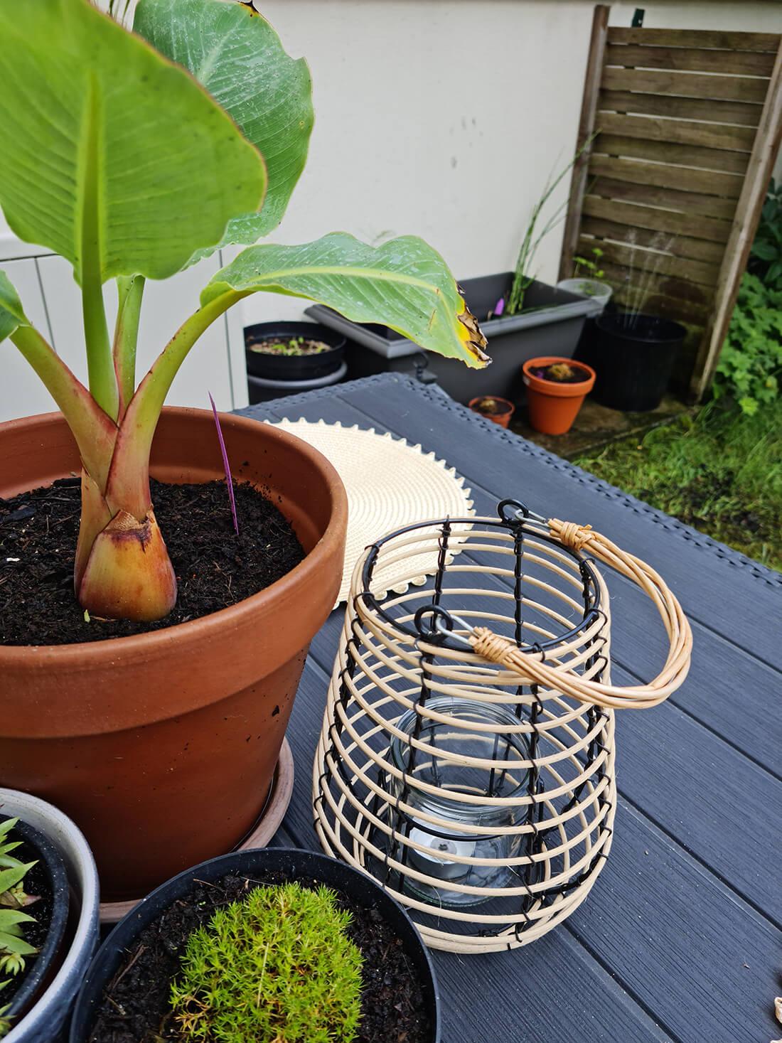 20210701 114850 2 - Garden tour : le résultat et la visite privée de mon jardin après relooking