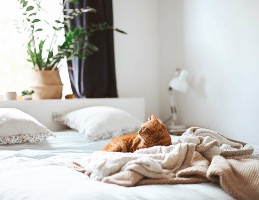 Comment choisir une literie de qualité pour la chambre ?