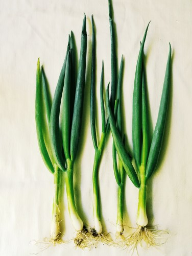 Whole Scallions Roots