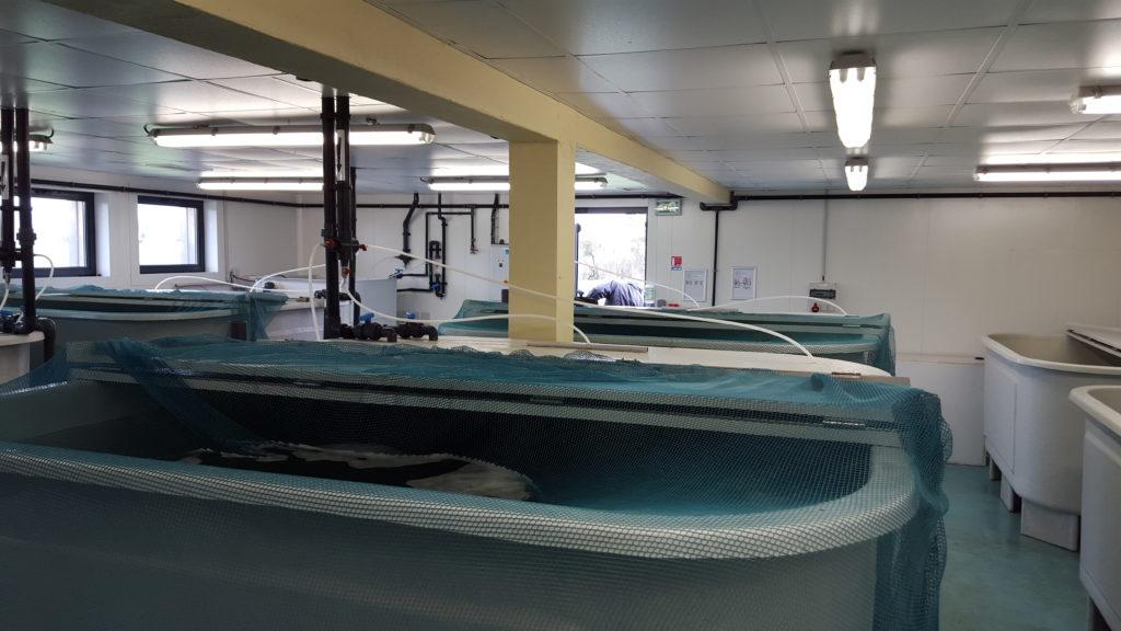 CHF Bureau Dtude Et De Conseils En Aquaculture CHF