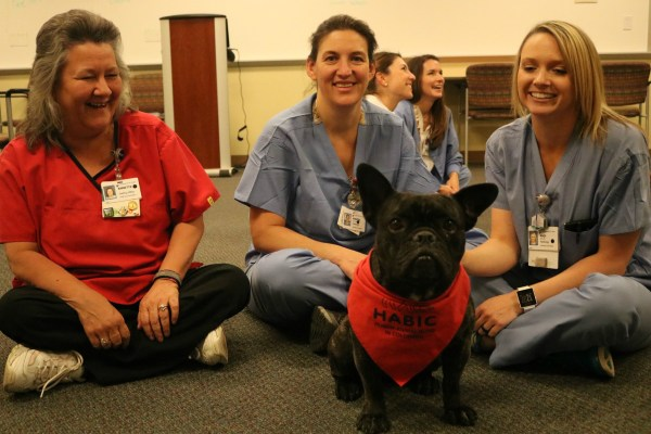 Boosts Animal-assisted Therapy And Education