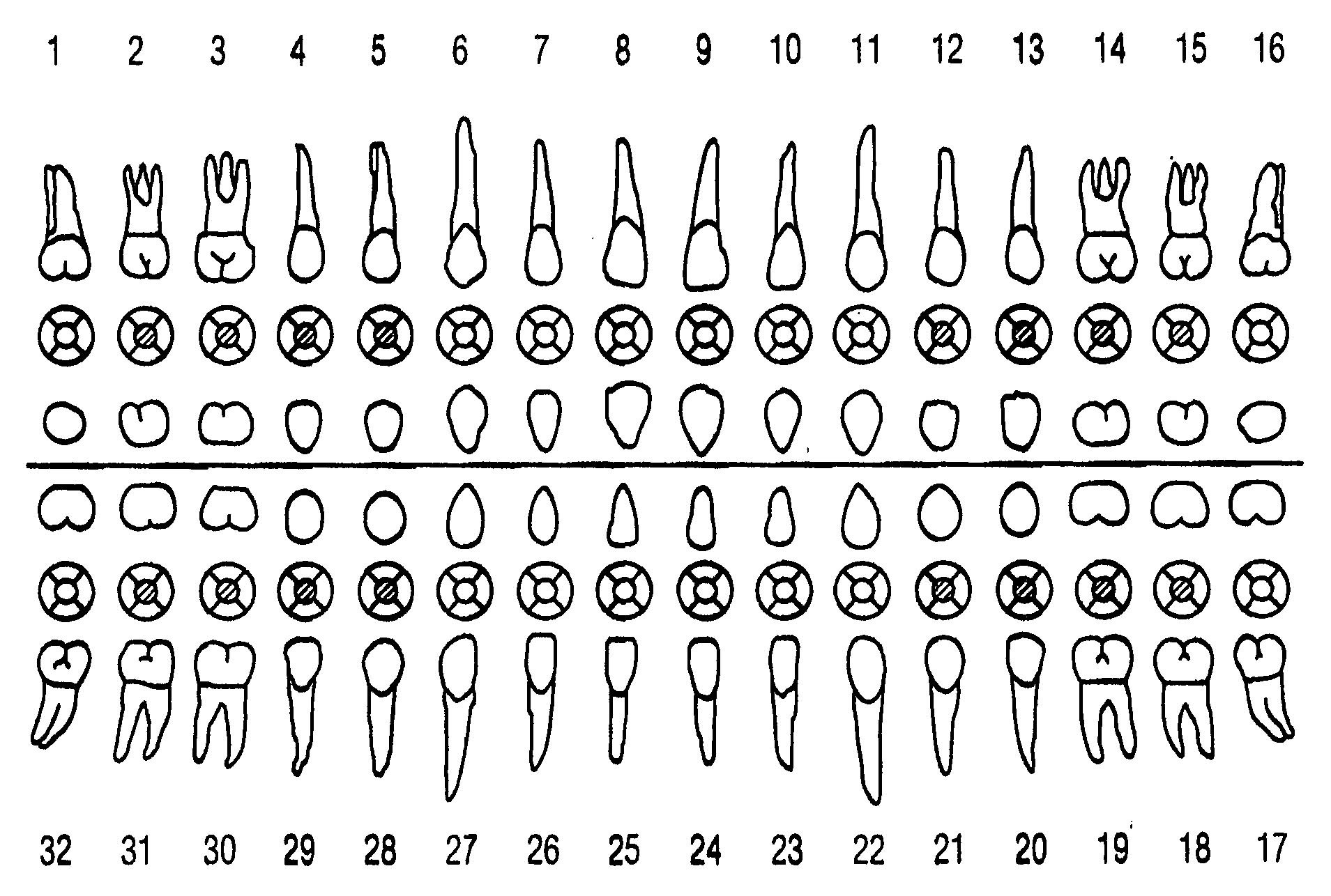 diagram of mouth with teeth numbers volleyball set periodontal charting what you really need to know