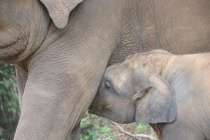 elephant-sanctuary1