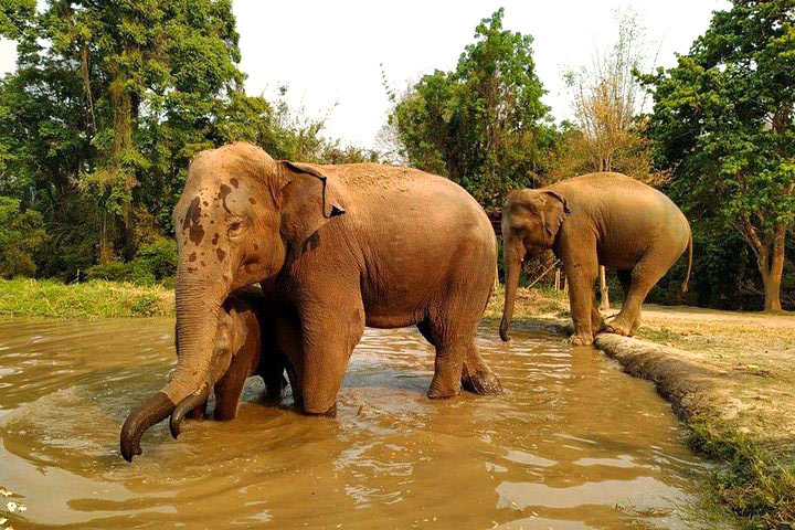 elephant-sanctuary3