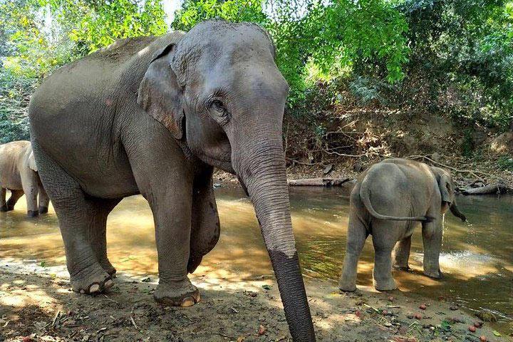 elephant-sanctuary5