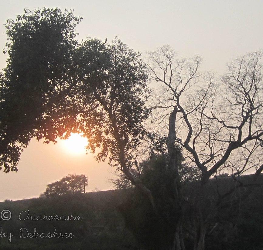 trees enveloping the sun