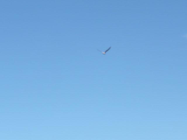 翼を広げ飛ぶカモメ